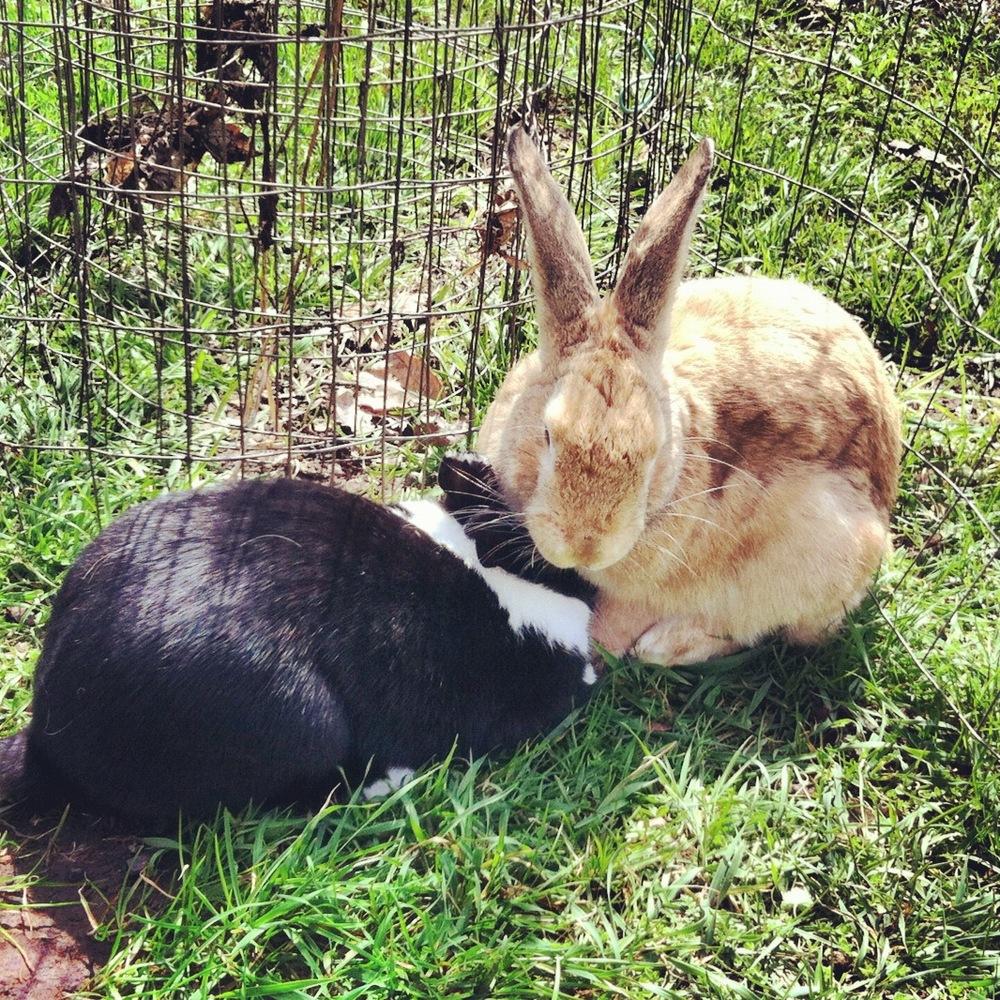 Buns: Ruby & Scotty