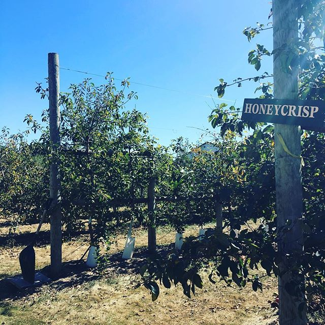 One of our fall rituals=apple picking in Union, IL. We visit the same small orchard every year, but we don't do much picking, actually. Most of the time is spent watching the kids jump off a hay bale and climb on old tractors #fall #applepicking #apple #illinoisfarmlife #chicagoparenting #middleouest