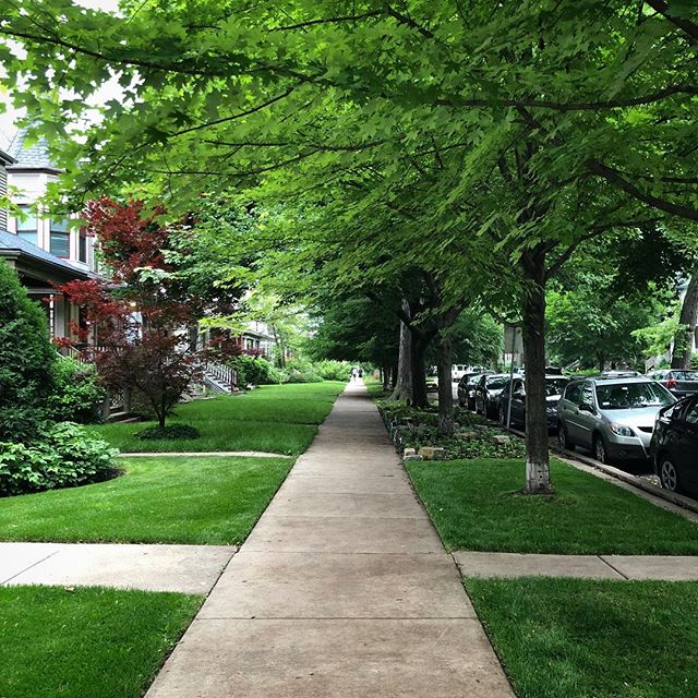 Wow, it's just so beautiful and lush in this neighborhood.  #logansquare #middleouest #midwest #summerinthecity #summer #green #lush