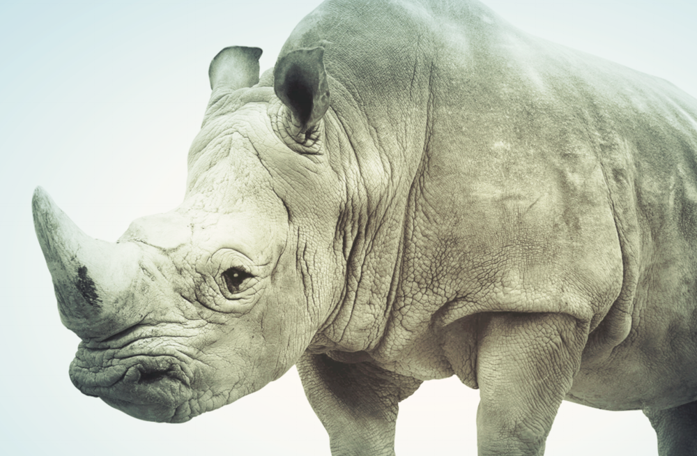 Rhinoceros: Luxury's fragile frontier -
