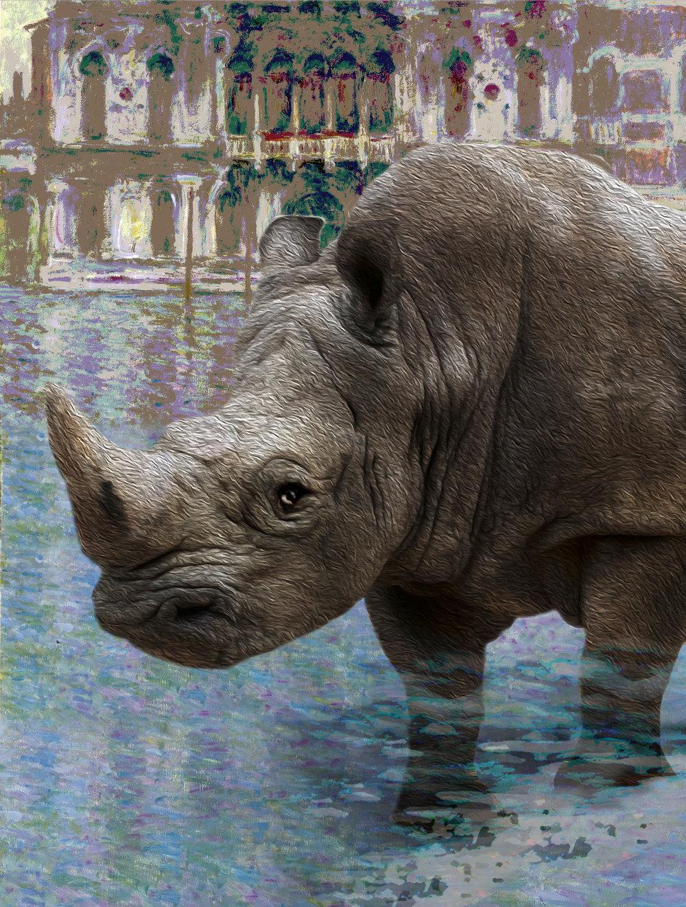 Rhino Venice , © Nikki Kovesi