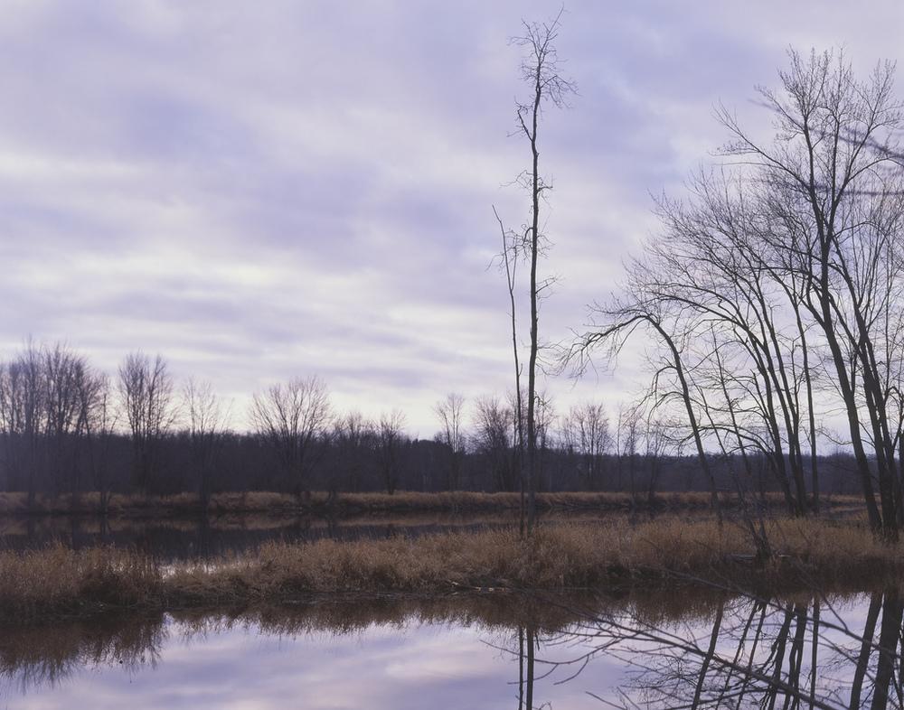 4x5 image, Petrie Island, Ottawa.