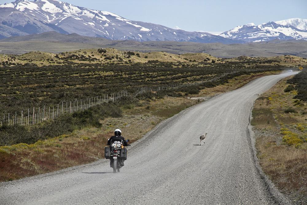 Patagonia Rhea.jpg