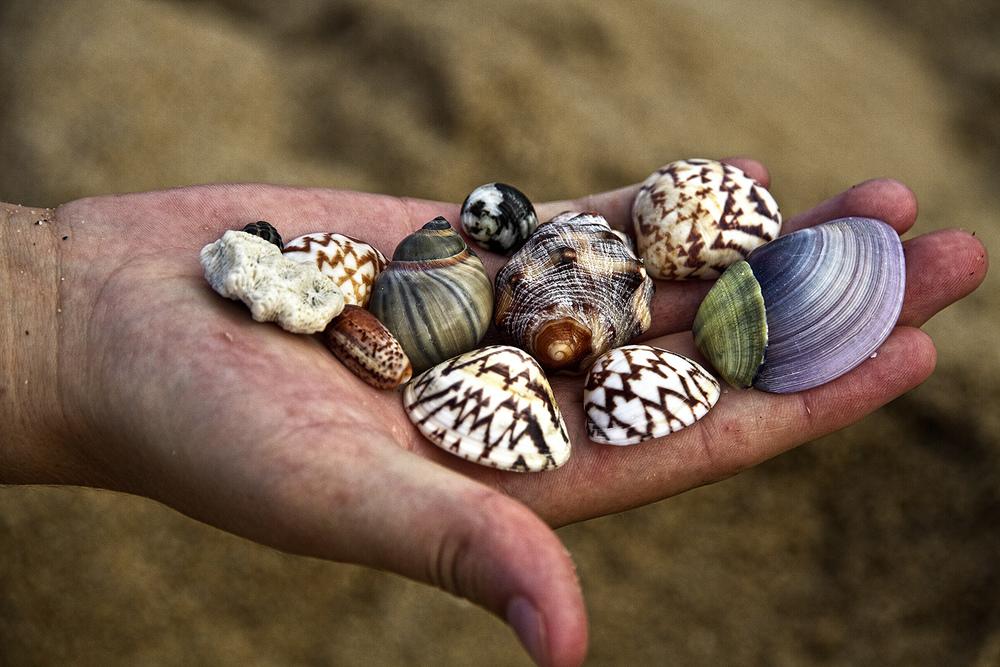 Wangetti Shells.jpg
