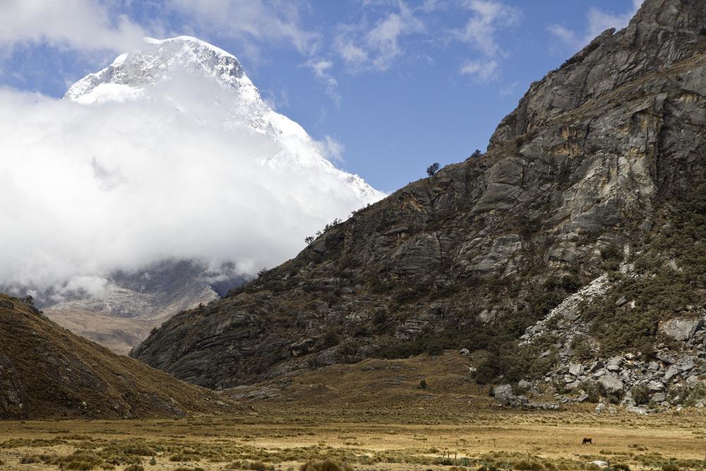 Huascaran Cow.jpg
