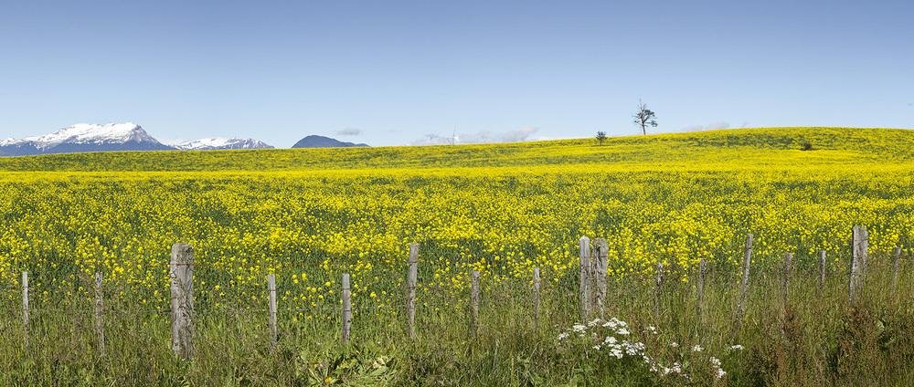 Patagonia Flowers.jpg