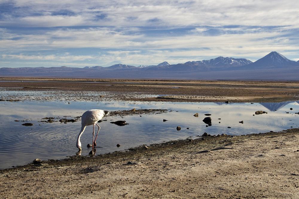 Laguna Flamingo 2.jpg