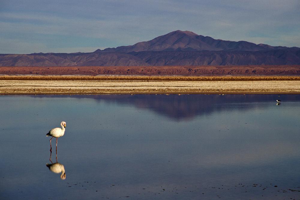 Lagunas Flamingo.jpg