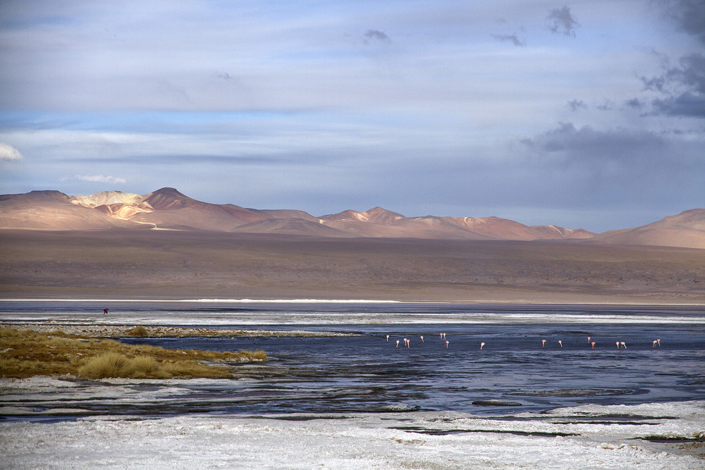 Laguna Colorada Flamingos.jpg