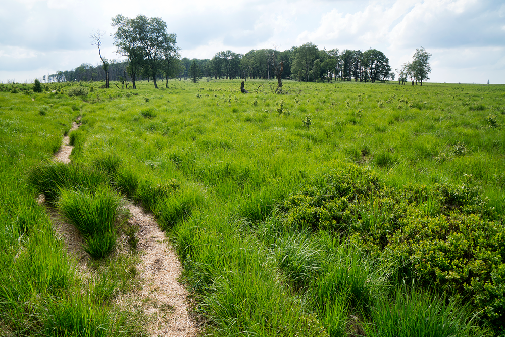 "My research showed several trails leading across the open lands of the Hautes Fagnes. I choose one that follows a creekbed and soon find myself shin-deep in mud with the bike on my back… true ""bikepacking"". I opt to backtrack to a wooded area where I had encountered a trail junction. I've lost an hour but gained insight. I choose a new path, this one heading straight out across a green expanse and toward a group of trees that stick out like a lost island in a grassy sea."