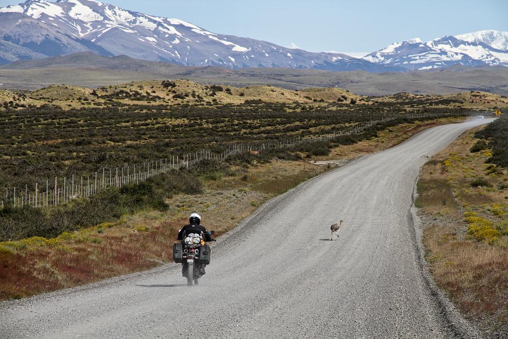 Patagonia-Rhea.png
