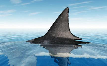 shark fin.jpg