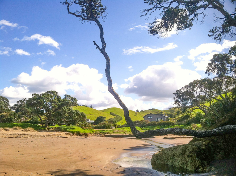One of the many stunning beaches near Whangarei