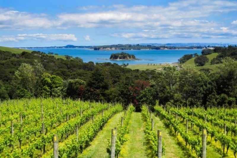 If you have a passion for wine,  Waiheke Island  is the place for you