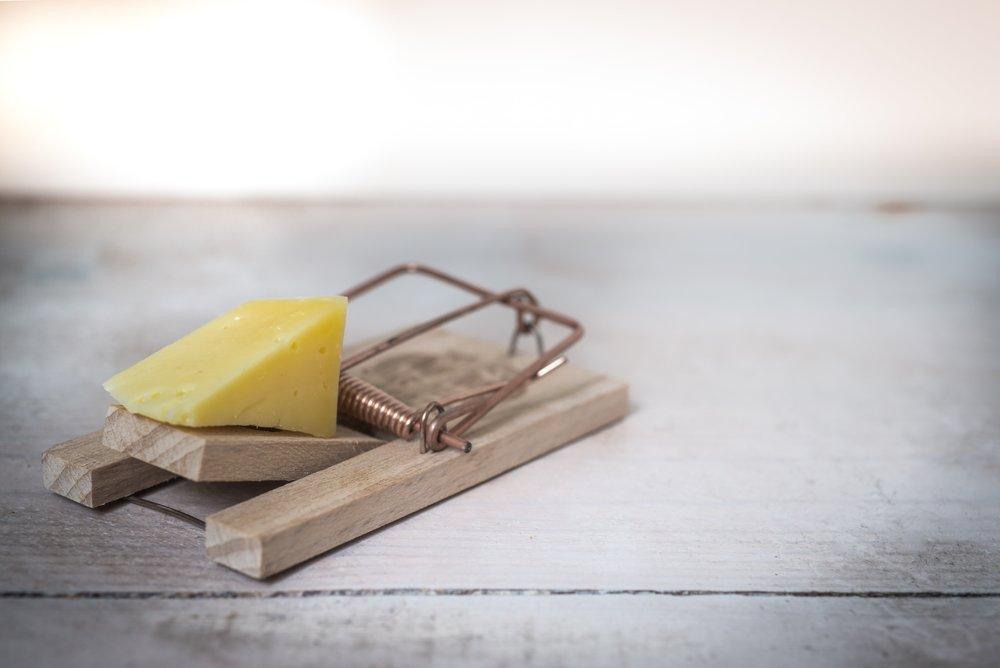 Cheese trap.jpg