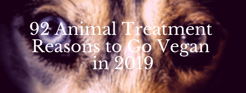 Animal Treatment Reasons to Go Vegan in 2019.png