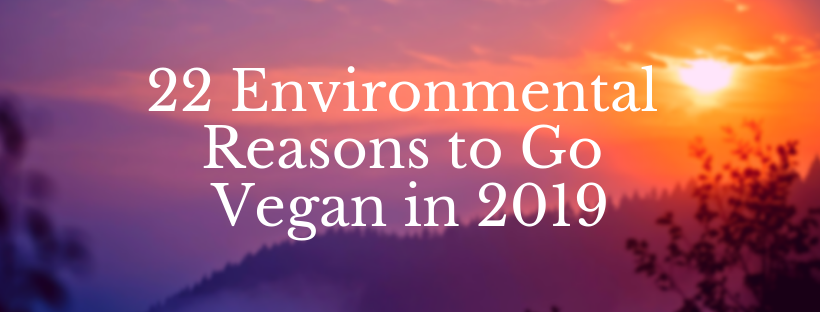 Environmental Reasons to Go Vegan in 2019.png