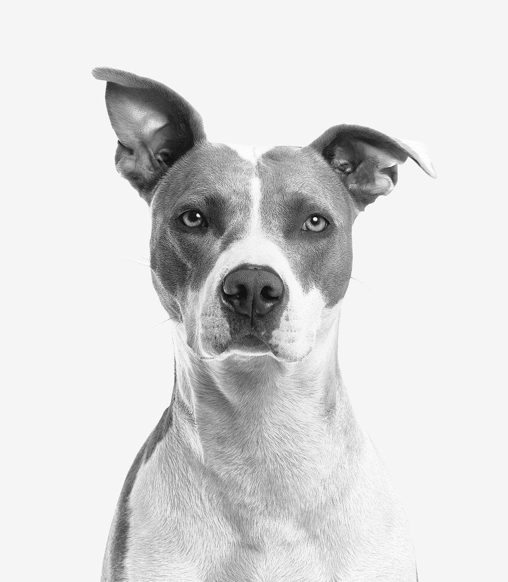 adorable-animal-black-and-white-825947.jpg