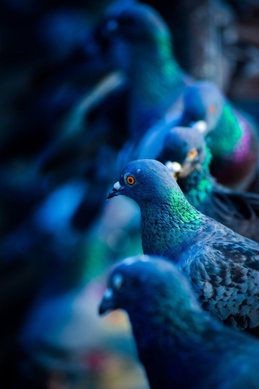 animal-photography-animals-blurred-background-1431465.jpg