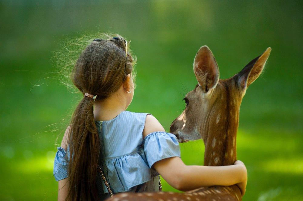 adorable-animal-animal-park-1172000.jpg