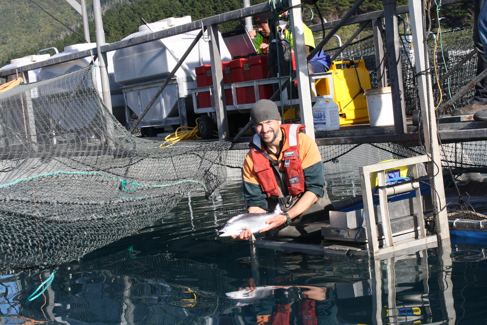 Assessing the fish on a salmon farm.