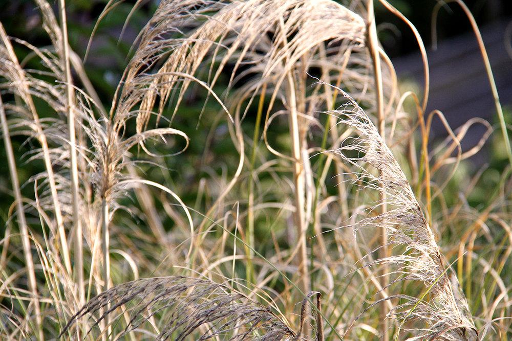 Weeds_9_Lekha_Singh_2016.jpg