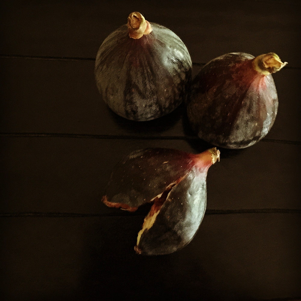 Lekha Singh –  figs  – 2015 – giclée on brushed aluminum