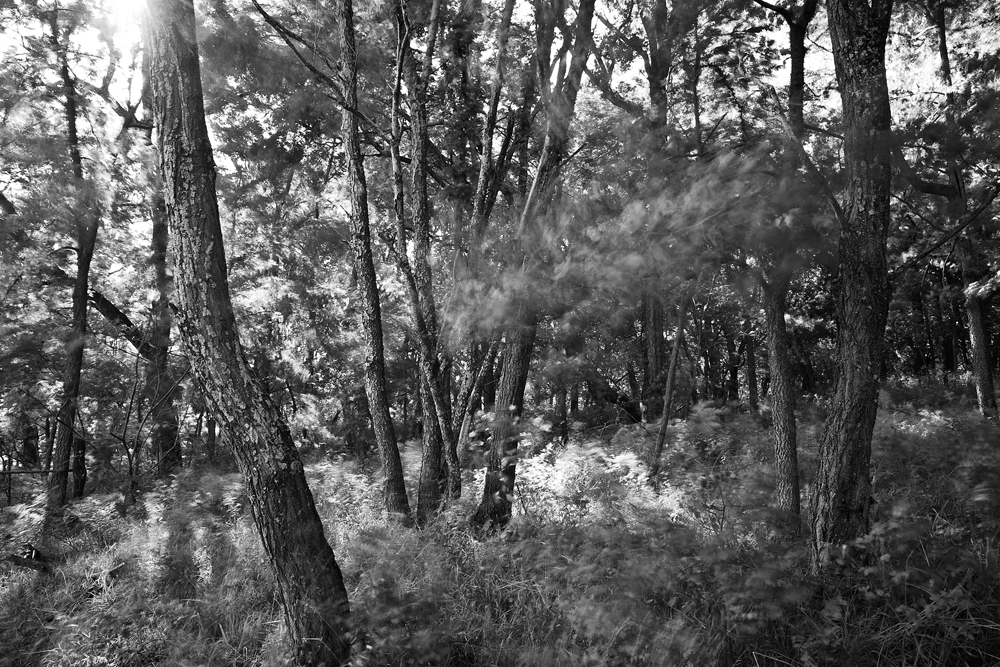 Trees in Motion, Douglas County, Kansas, 2010