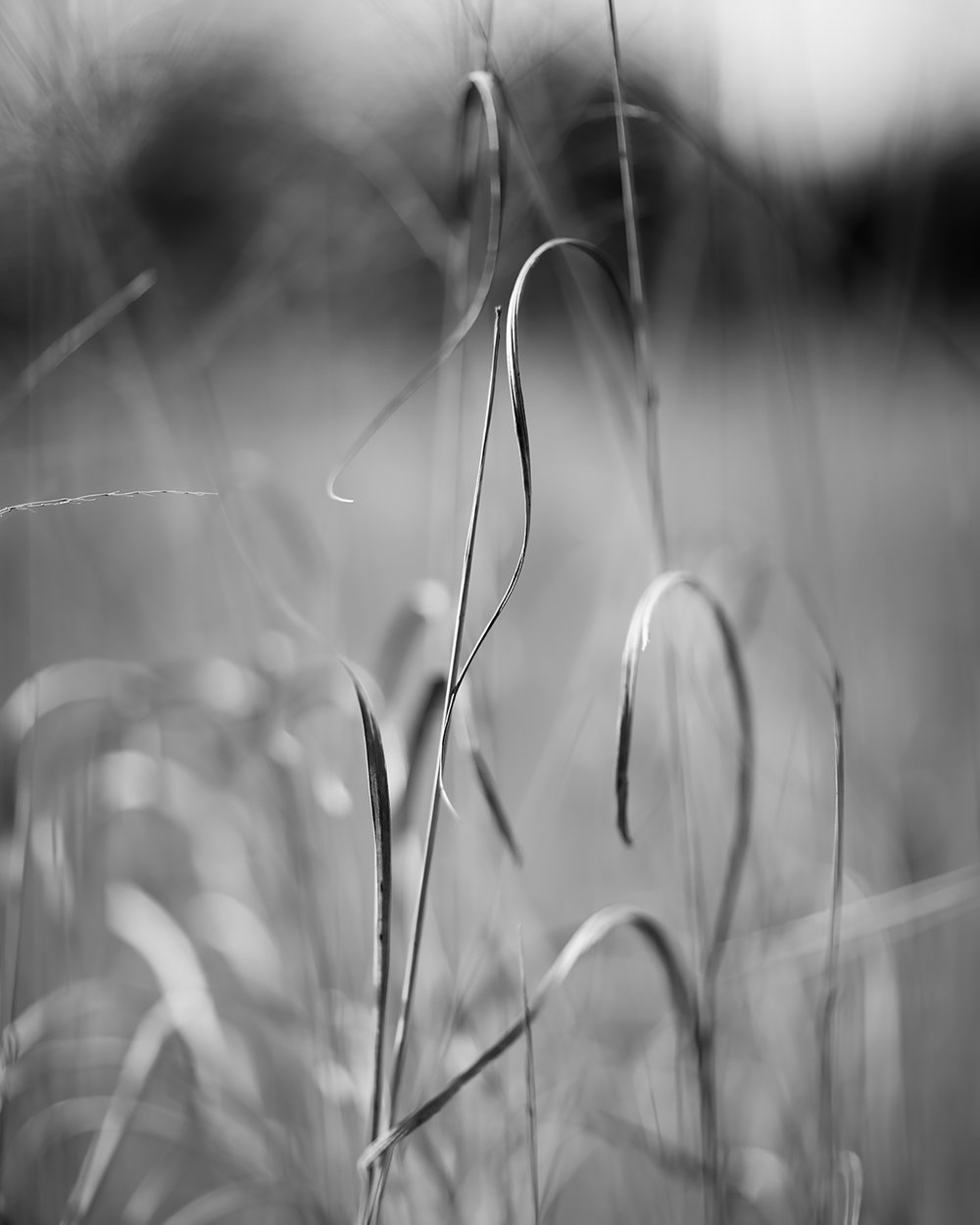 Baldwin Grasses, Baldwin City, Kansas, 2017