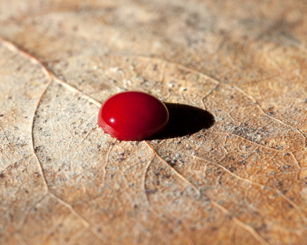 My Blood on Cottonwood Leaf, Baldwin City, Kansas, 2015