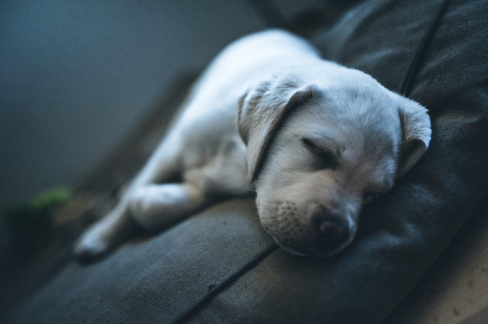 Sonny toivottaa hyvää yötä!