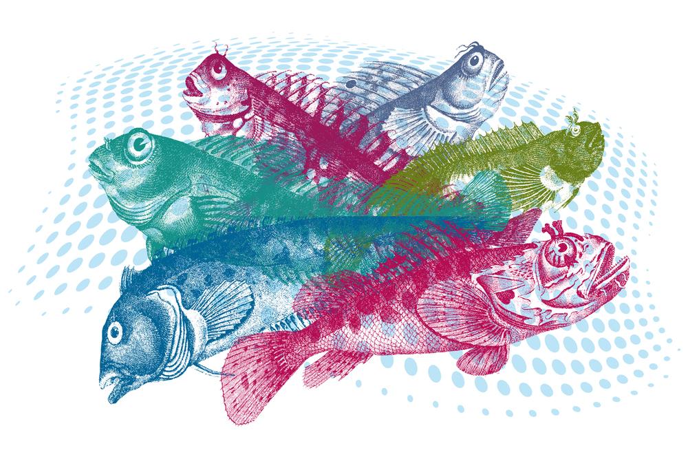 fish_wasserwelleEXP_5.jpg