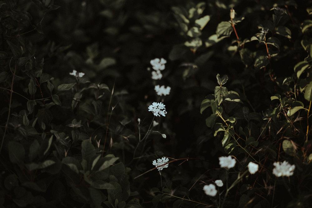 20170604_Lilla+Tomi_engagement_w_182__MG_3325.jpg