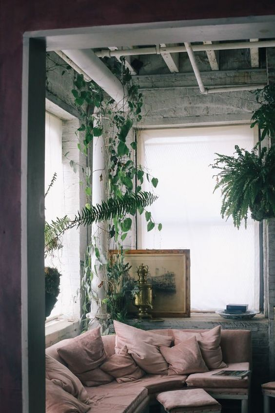 We cannot get enough of ceiling hung plants. ferns make some of the best plant chandeliers.