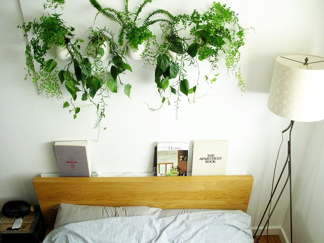 here is a great example of a maidenhair fern used long with other dip plants creating a complimentary piece of art. its also such a breath of fresh air, when compared to huge random things we hang on top of our beds, in the name of decor.