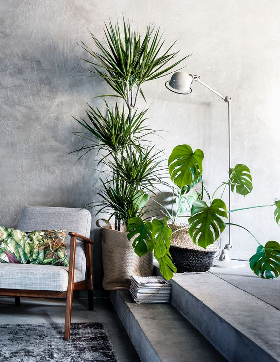 We love the idea of combining the horizontal spread of the Monstrea, with a tall plant to create an explosion of green with just two plants.