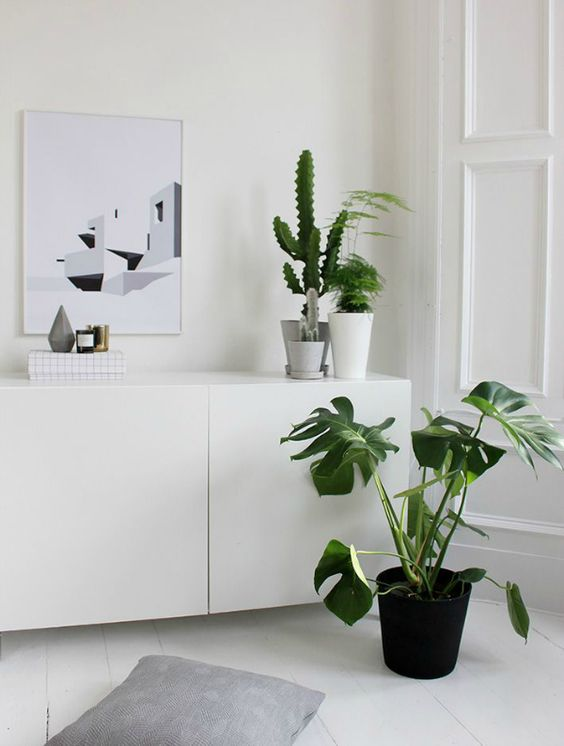 We've always loved simple whites, and when paired with the Monstrea, the space becomes completely fresh. The minimalist painting on the wall definitely helps.