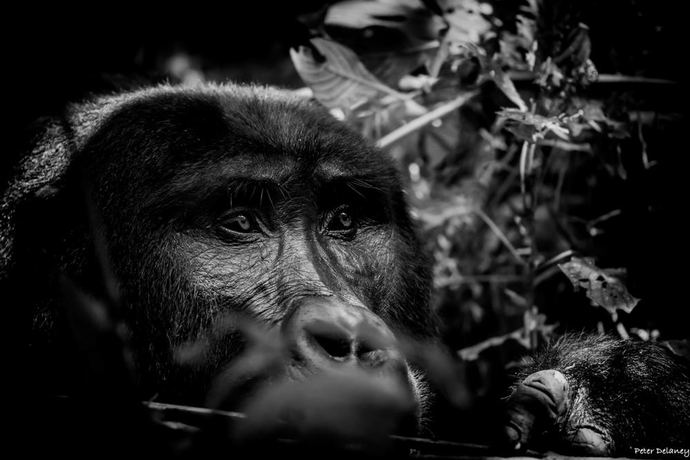 bwindi-gorillas-01.jpg