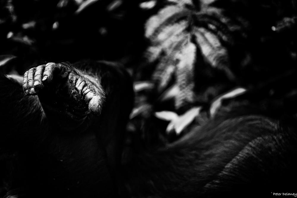 chibale-chimps-19.jpg