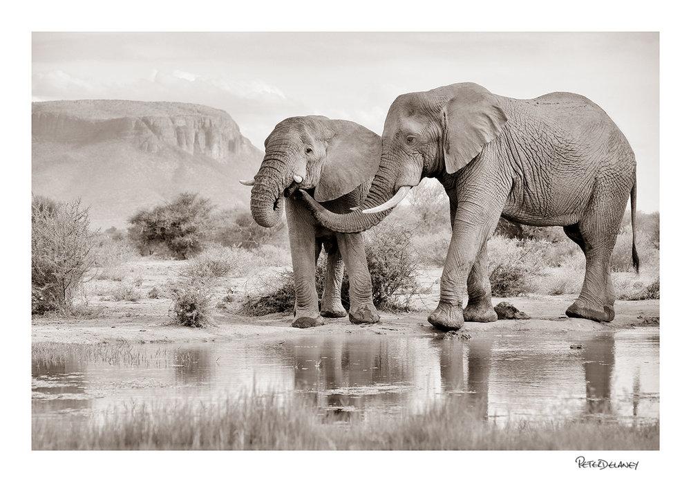 Marathba+Elephants.jpg