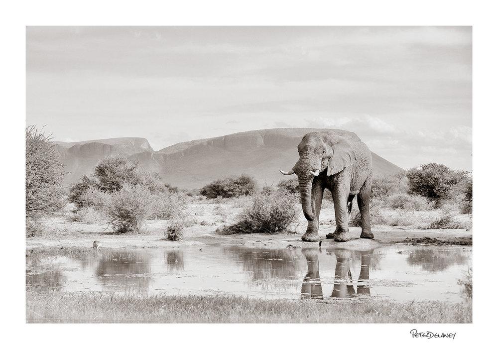 Elephant+Bull+Marthaba+Mouintains.jpg