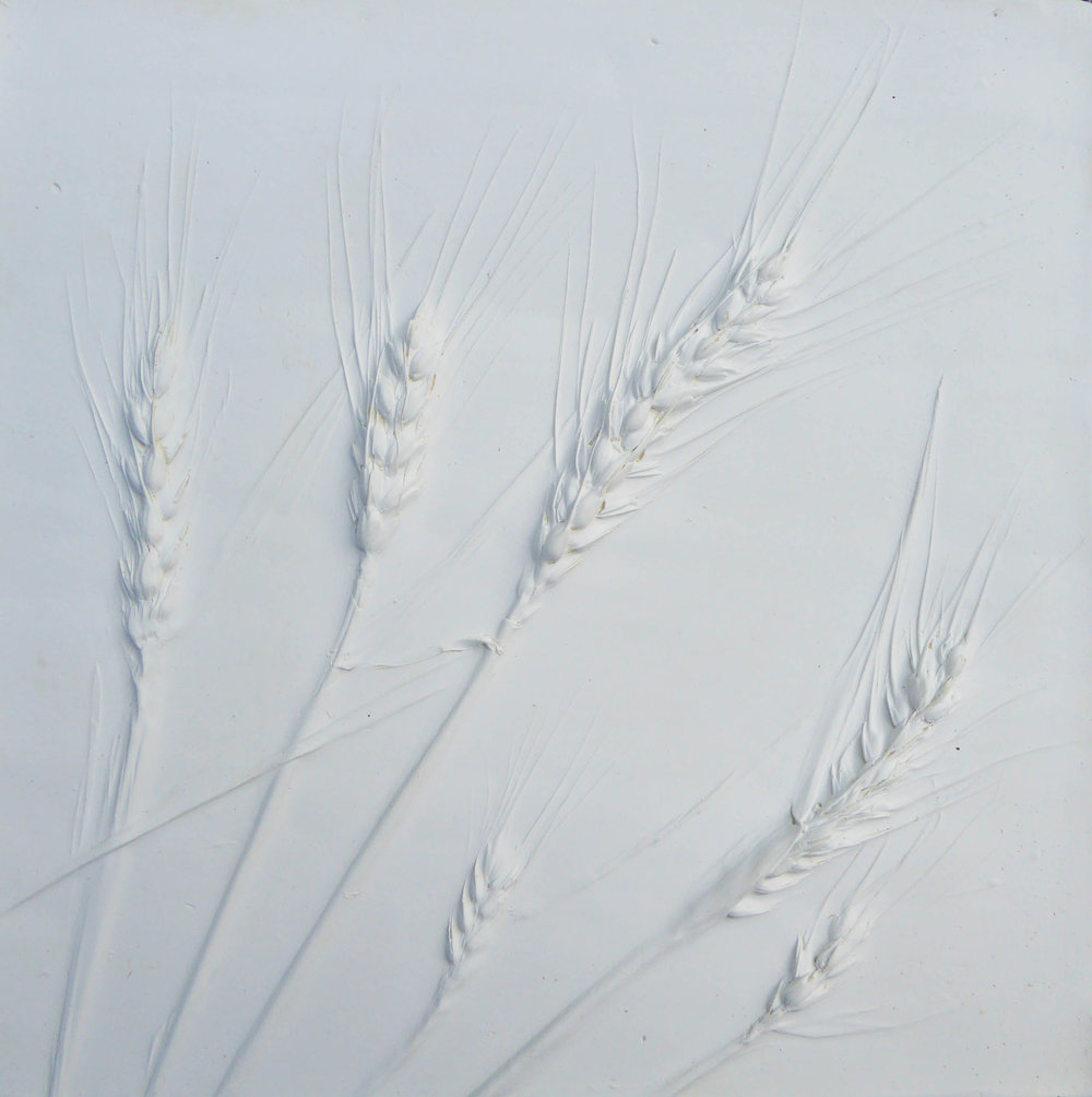 9ins wheat crop.jpg