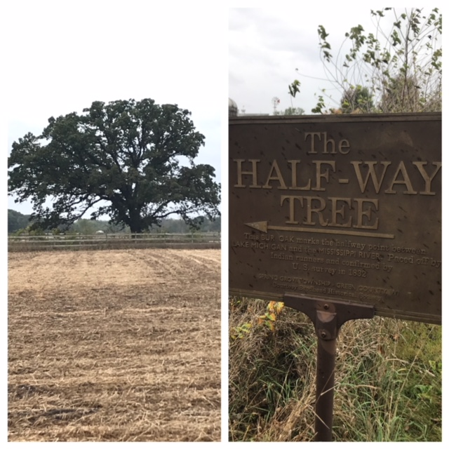 This BUR OAK marks the halfway point between LAKE MICHIGAN and the MISSISSIPPI RIVER.  Paced off by Indian runners and confirmed by U.S.Survey in 1832.  (Spring Grove Township - Green County, Wisconsin).