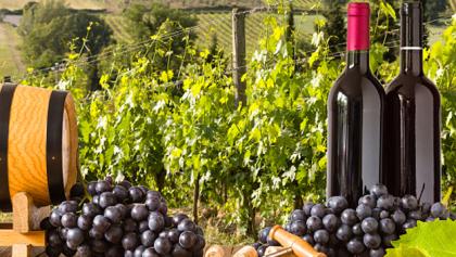 wineryfeature1.jpg