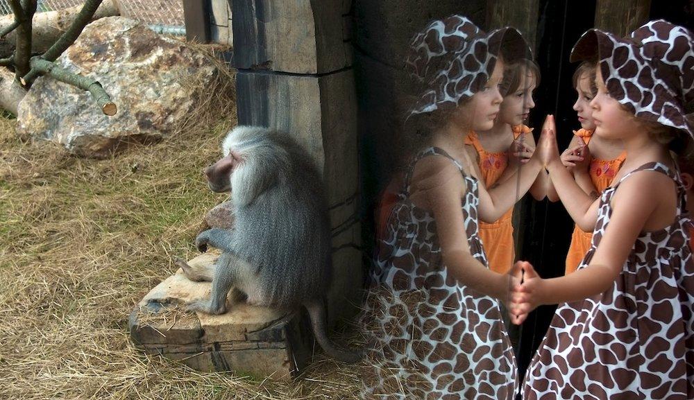 0804_KCLO_Zoo
