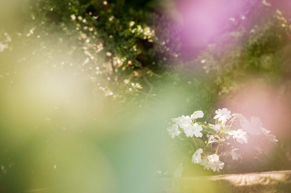 22-Lois-Keane-Flowers.jpg