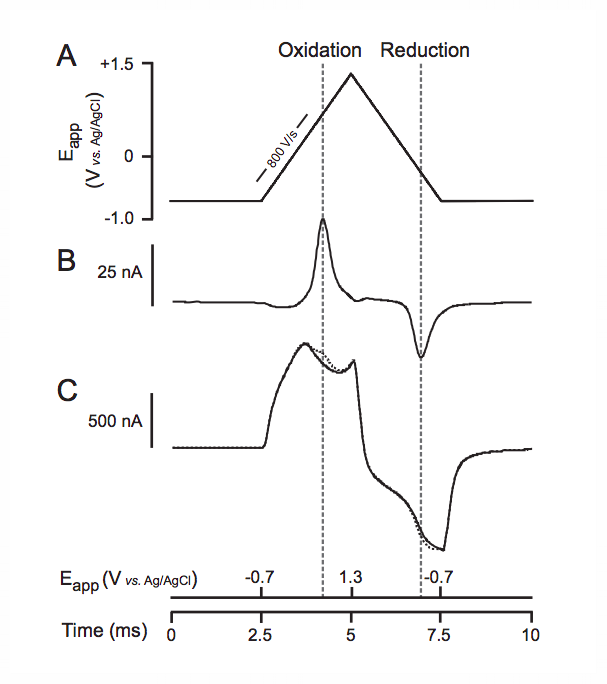 Fast-scan cyclic voltammetry (FSCV) voltage waveform and dopamine (DA) voltammograms. A. Typical triangular voltage waveform applied to a carbon-fiber microelectrode used with FSCV with a Ag/AgCl reference electrode. B) DA voltammogram obtained by subtracting the background current from that obtained in the presence of DA. C) Background (solid line) and DA currents (dotted line) recorded during calibration of a carbon-fiber microelectrode (from Patel and Rice, 2013).
