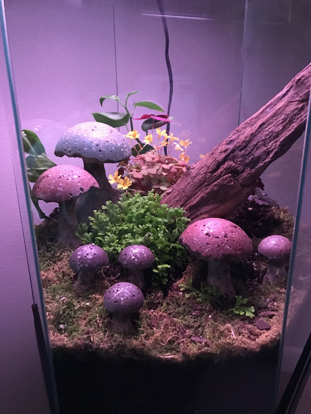 Mushrooms in a terrarium.
