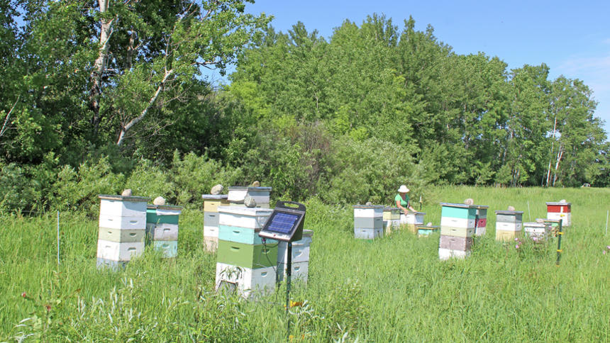 A sweet arrangement: Couple develops hardy bees, solar gardens and location-specific honey