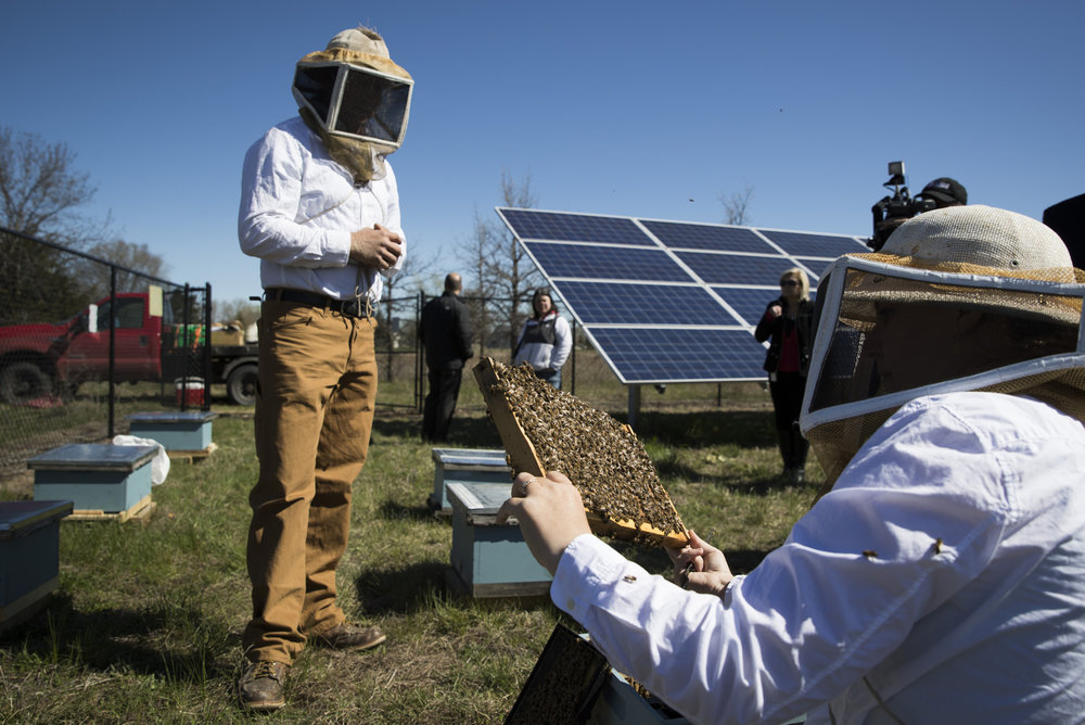 Ramsey energy company finds perfect pairing in putting bees, solar panels together